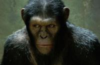 rise-of-the-planet-of-the-apes_t